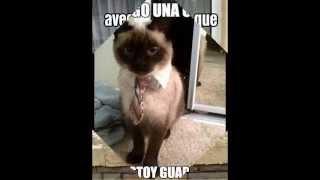 Imagenes Con Frases Chistosos De Gatos Y Perros