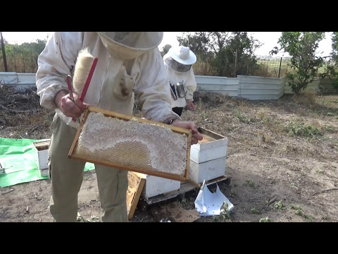 отбираю и качаю первый мёд 4/5/ 2017 год