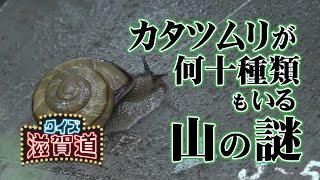 カタツムリが何十種類もいる山の謎!?:クイズ滋賀道