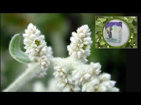 Трава пол пала лечебные свойства, применение