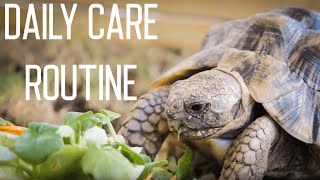 Tortoise Daily Care Routine
