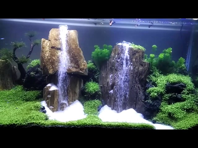Aquascape 2 air terjun (waterfall aquascape)