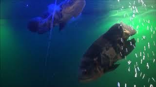 バイカル湖博物館の魚たちFishesinBikalMuseum