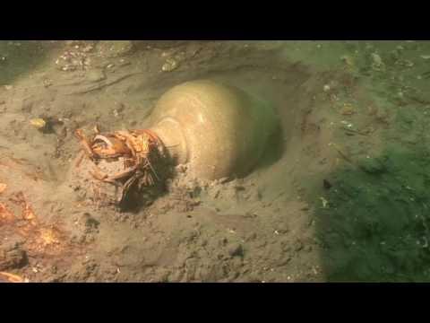 태안 마도2호선 수중발굴조사