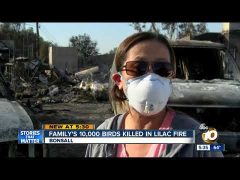 Family's 10,000 birds killed in Lilac Fire