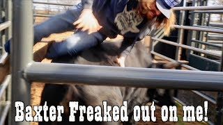 Baxter went crazy - Rodeo Time 119