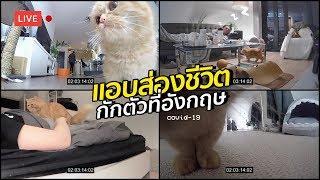 กักตัวกับชีวิตทาสแมวขาสั้น 24ชั่วโมง | #สตีเฟ่นโอปป้า