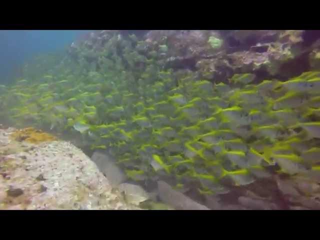 Scuba Diving Sydney - Long Reef 2014