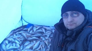 Супер клев!!! Сорога и окунь на удочку. Часть 4. Winter fishing.