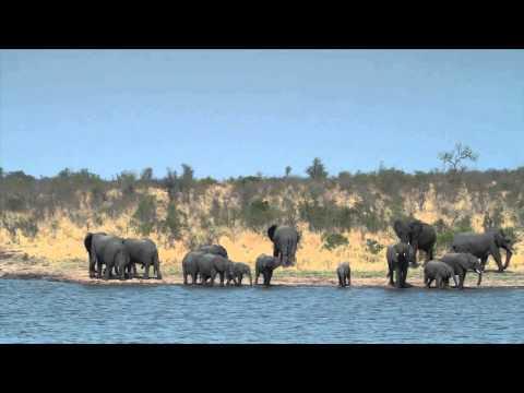 South Africa - Kruger National Park -  Elephant Tube