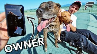 SAVED 2 LOST DOGS (REUNITED WITH OWNER)