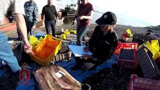 Ловля браконьеров на Енисее (Путина-2018)