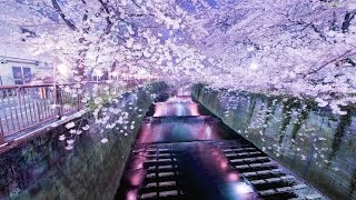TOKYO - Asian ChillOut {Japanese Zen Lounge}