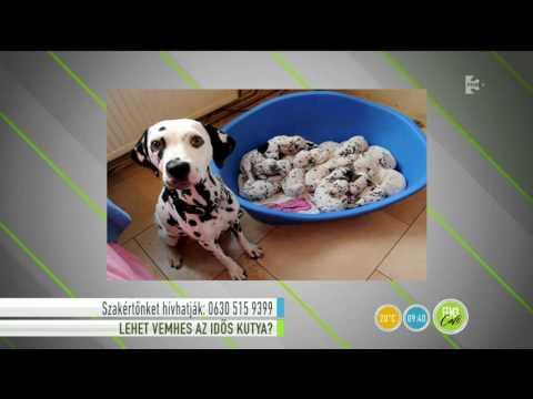 Kézimunka videók Prosztata