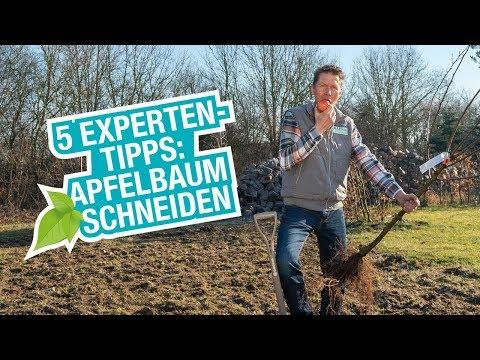 Der Apfelbaum: Pflanzen, schneiden und düngen