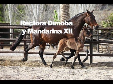 Mandarina XII y Rectora - 2018