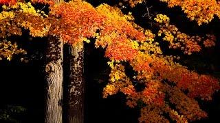 FALL PHOTOGRAPHY TIPS - Using A Polarizer To Make Your Autumn Photos Pop