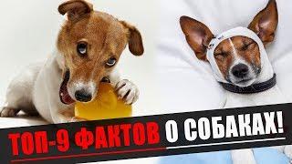 Топ-9 Необычных Фактов О Собаках!