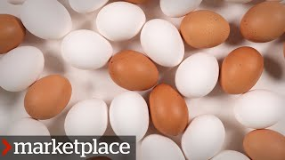 Which eggs are more nutritious? Testing organic, free-run and conventional (Marketplace)