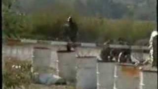 Danbat Dvor 1995, 7 af 8