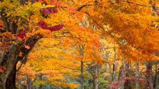 Золотая осень Лунная соната Бетховена