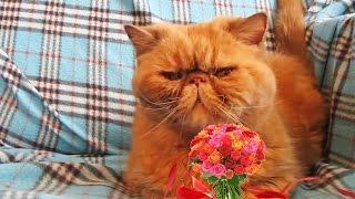 Поздравления на 8 марта от кота Пончика