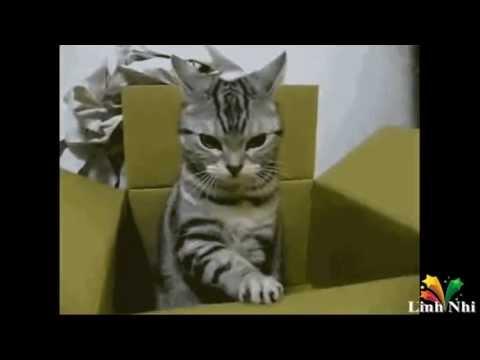 Top 10 chú mèo hài hước nhất thế giới