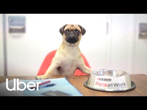 Stop Everything: Uber Is Bringing Puppies To Australian Offices
