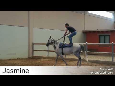 Montare in piedi sul cavallo