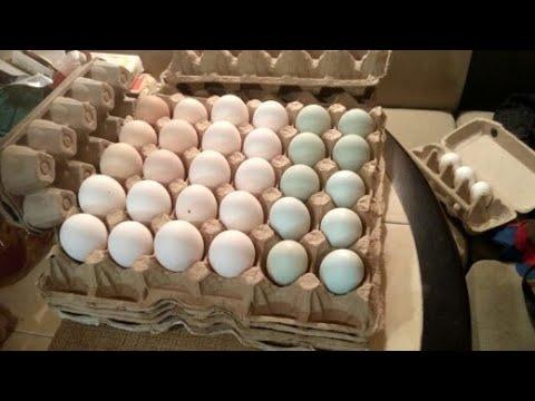 , title : 'Почему куры перестали нестись? Итоги сбора яиц.Основные причины снижения яйценоскости кур.