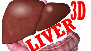 Liver Anatomy and Gallbladder - Part 1