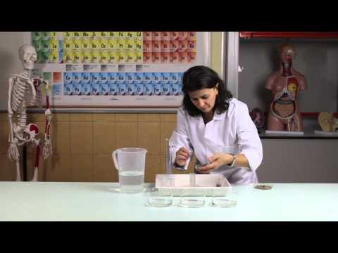 Gyertyák propolis- vel a prosztatitis címekből