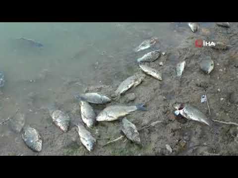 Manavgat'ın balıkları toplu halde ölüyor!