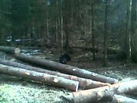 Mednis (15.03.2012)