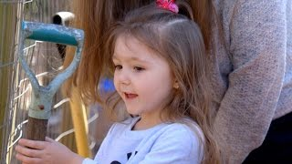 Adoptive parents, birth father battle for custody of 3-year-old girl | ABC News