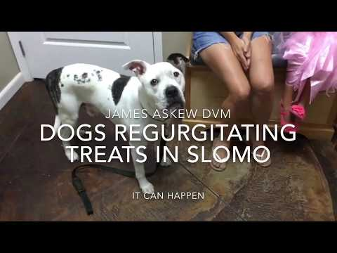 DOGS REGURGITATING TREATS IN SLOMO