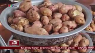 công nghệ chế biến hành khô từ khoai tây thối.