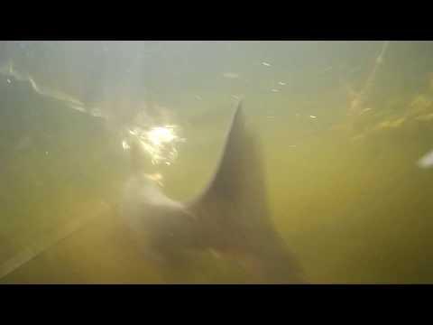 Подводная охота удача в мутняке