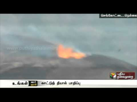Forest-fire-destroys-precious-trees-near-Senkottai-Nellai