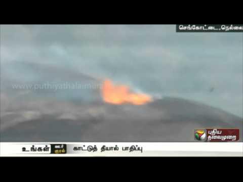 Forest-fire-destroys-precious-trees-near-Senkottai-Nellai
