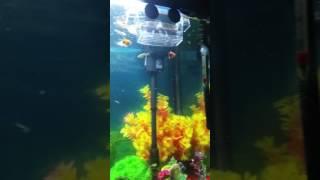 My aquarium/rastaquarium tropical fish