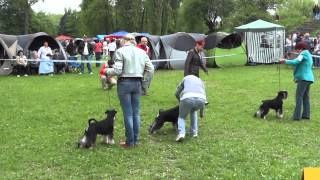 preview picture of video 'IDS Lodz 2012 - Miniature Schnauzers B/S'