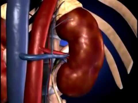 Naranče i hipertenzija