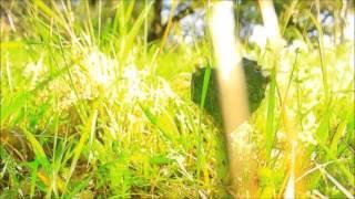 Geiles Leben   Polargebeat | Sky Down Club Mix