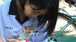 松本穂香、制服姿で猫たわむれる… 映画「あの頃、君を追いかけた」メーキング映像公開