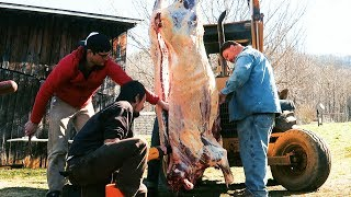 Beef Butchering on Family Farm - Homestead Food Production