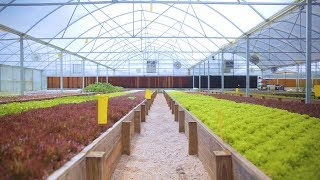 Tour an AQUAPONICS FARM in Texas 🐟 + 🌿= 🤠 Sustainable Harvesters