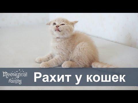 Как понять что у котенка рахит?