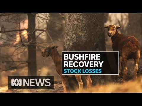 Losses mount for farmers in bushfire ravaged regions | ABC News