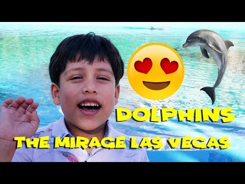 DOLPHINS at The Mirage Las Vegas